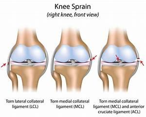 Chrupavka koleno
