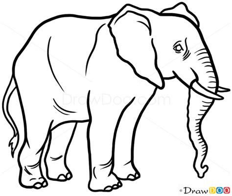 draw elephant wild animals
