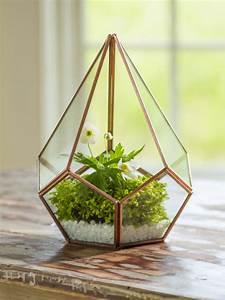 Glass Terrarium - Teardrop Tabletop Terrarium - Small