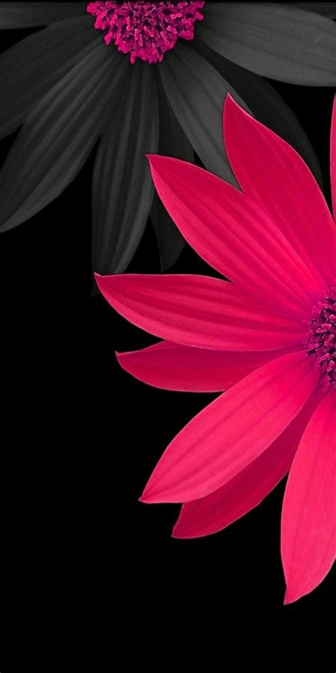 Flower Iphone Black Background Wallpaper by Pink And Black 3d Flowers Wallpaper Pink And Flowers