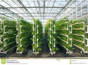 How Grow Indoor Vegetable Garden