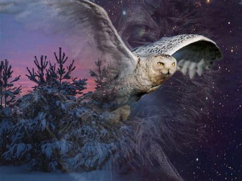 images arriere plan bureau gratuit fonds d 233 cran animaux gt fonds d 233 cran oiseaux hiboux et chouettes au clair de lune par tonio