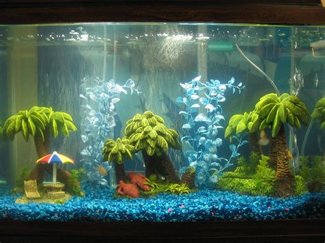 Ideas For Fish Tank by Nature Lover Silver Shark