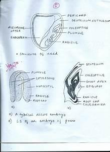 Mandal U0026 39 S Desk  Diagram Of Reproduction Of Flowering Plants
