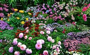 autumn garden plants autumn flowering plants blog gardora net