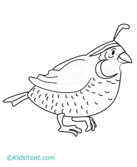 quail coloring pages printable
