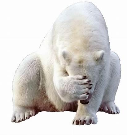 Bear Polar Pngimg