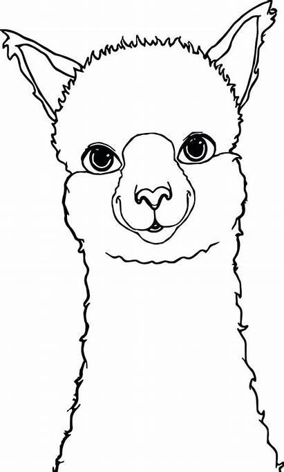 Coloring Pages Alpaca Llama Printable Drawing Template