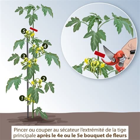 comment tailler les tomates