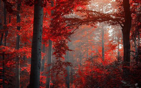 ruby red forest wallpaper nature wallpapers