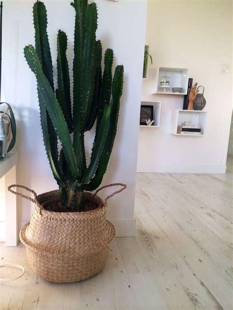 plante verte bureau 1000 idées sur le thème pots succulentes sur