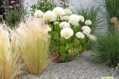 hortensien hydrangea pflege pflanzen schnitt ueberwintern