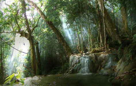fungsi hutan lindung pengertian gambar contoh