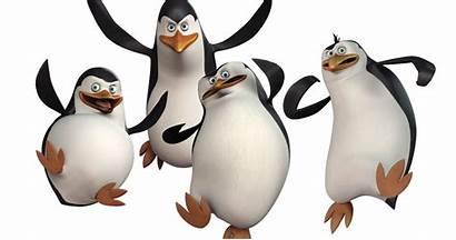 Madagascar Penguins Zoo Escape Weird