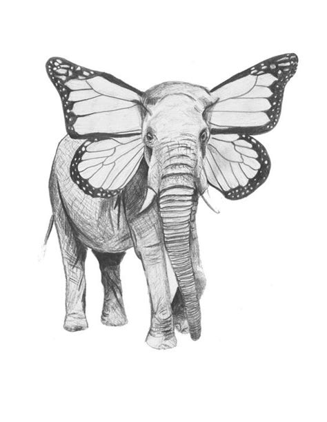 Elefly Drawing Elephant Butterfly Print of by