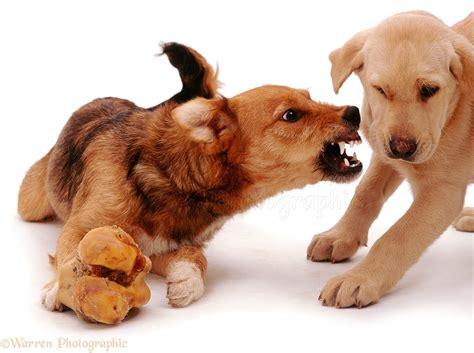 star aggression   star dog trainers florida