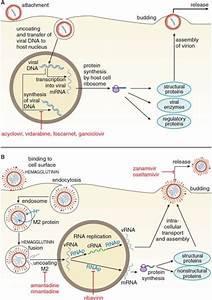 Antiviral Agents  Nonretroviral