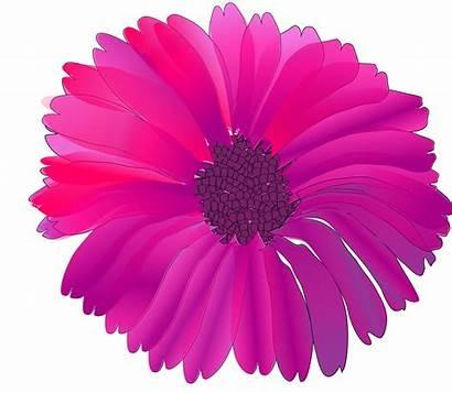Flower Flowers Clip Pink Fuschia Clipart Fuchsia
