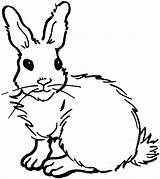 Rabbit Coloring Pages Bunny Animals صوره ارنب Drawing sketch template
