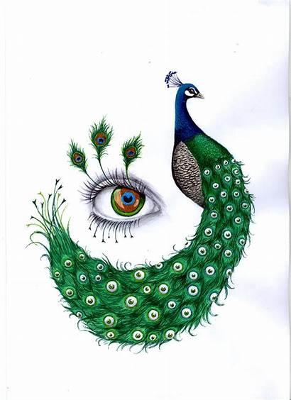 Peacock Drawing Peacocks Drawings Colour Draw Deviantart