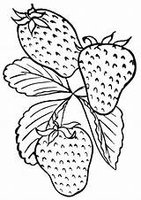 Strawberries Coloring Pages Print Food sketch template
