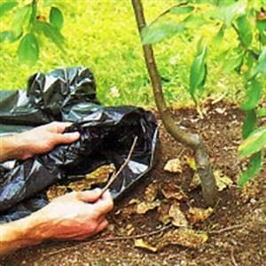 Rost Entfernen Werkzeug : rost eine pflanzenkrankheit die durch pilze verursacht wird ~ Watch28wear.com Haus und Dekorationen