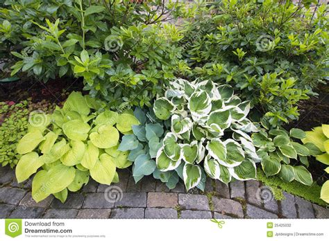 images of shrubs plants variety of hostas and shrubs along garden path stock photo image 25425032