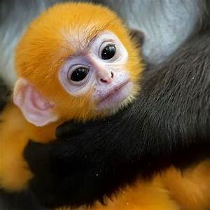 Really Cute Monkeys Pictures