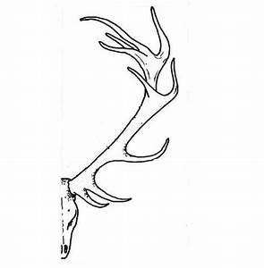 A Schematic Picture Of A Deer Antler  A Good Cross