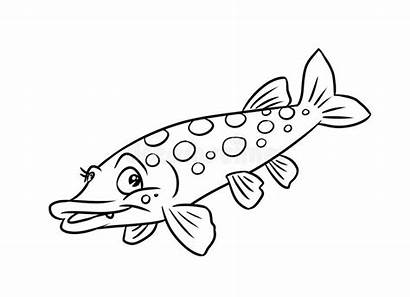 Pike Coloring Fish Pages Illustration Royalty Predatory