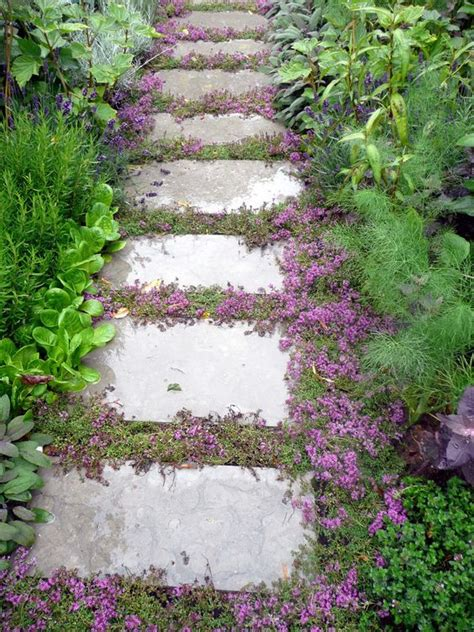 walkway plants top 10 plants and ground cover for your paths and walkways gardens walkways and herbs garden