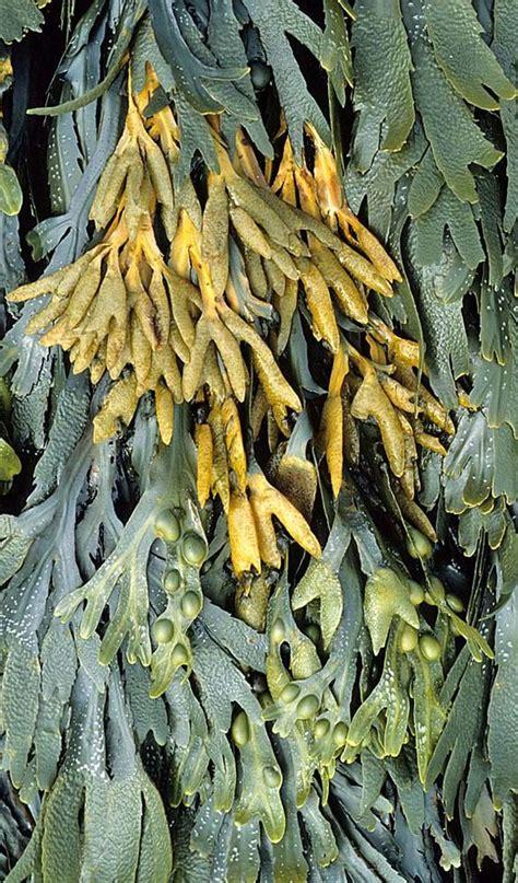 seaweed color diane carnevale color inspiration seaweed 2