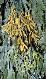 Diane Carnevale: Color Inspiration—Seaweed 2  Seaweed