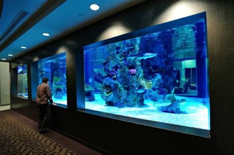 home shark tank aquarium acrylic aquariums panels