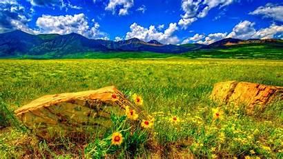 Summer Desktop Flowers Nature Wild Landscape Meadow