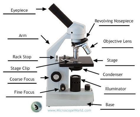Microscope Quiz Quizlet Labeling The Parts Of The Microscope Blank Diagram