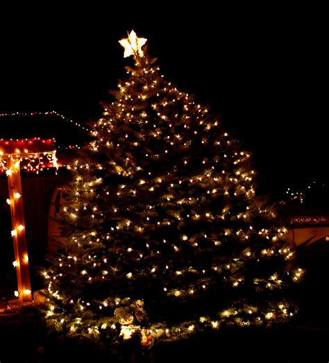 tree with white lights picture free photograph