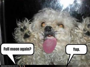 Funny Image Gallery: Very funny dog pictures with captions ...