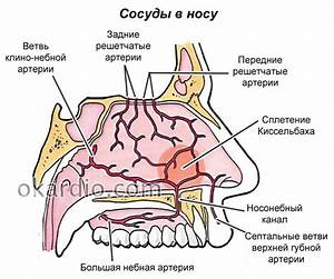 Кровотечение из носа при гипертонии лечение