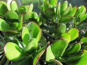 Marc De Café Plantes D Intérieur : design interieur plantes vertes int rieur plantes maison d co plantes vertes d int rieur pour ~ Melissatoandfro.com Idées de Décoration