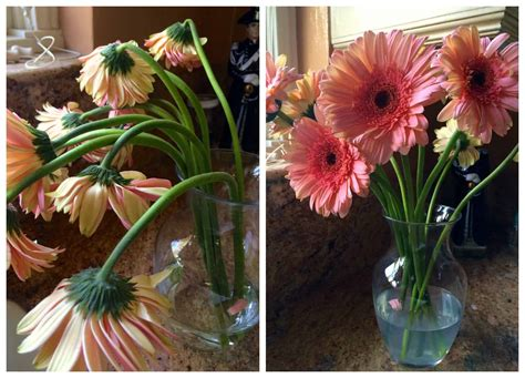 How To Revive Roses In A Vase - how to revive gerbera daisies s cucina