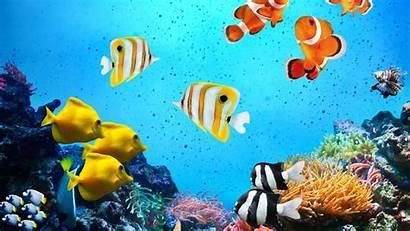 Tropical Fishes Desktop