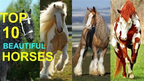 horses most horse breeds