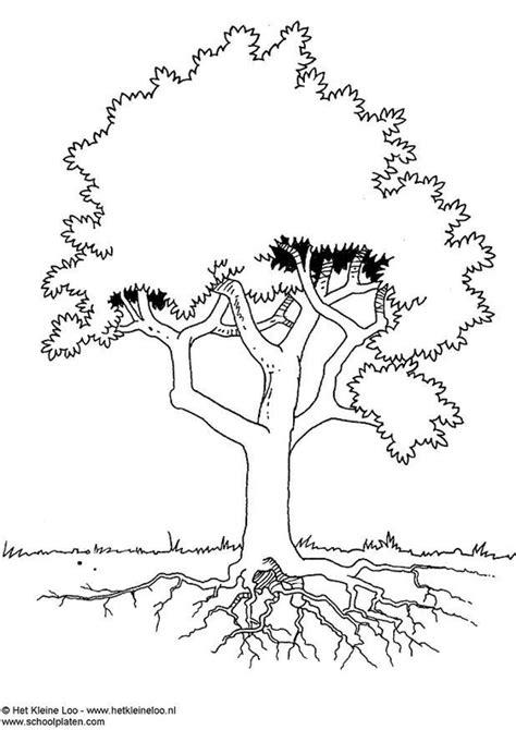 Bomen Kleurplaten by Kleurplaat Boom Afb 3724