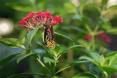 Butterfly Animated Garden Miami Uhealth