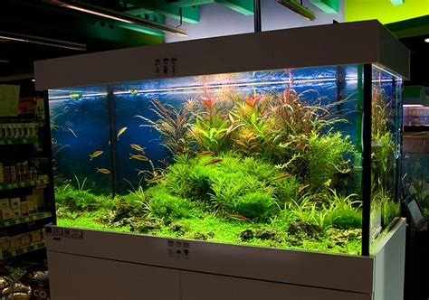 Oliver Knott Aquascaping by New 360 Liter Aquascape By Oliver Knott Photo Oliver