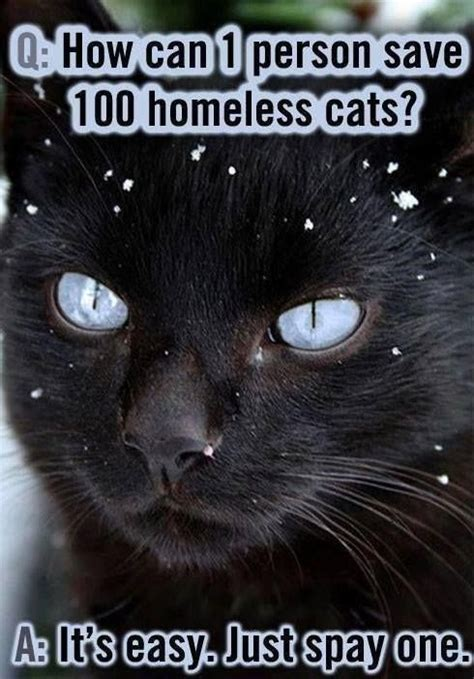 how do you if your going blind how do you if your cat is going blind faith evidence