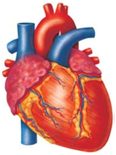 transportation  circulatory system