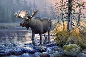 Moose Full HD Wallpaper and Background Image | 2376x1588 ...