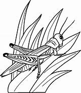 Grasshopper Coloring Pages Bugs Butterflies sketch template